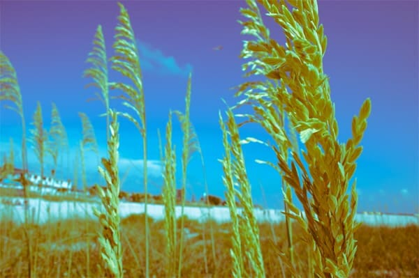 How to Create Cool Retro Lomo/Crossprocess Effects Using Lightroom
